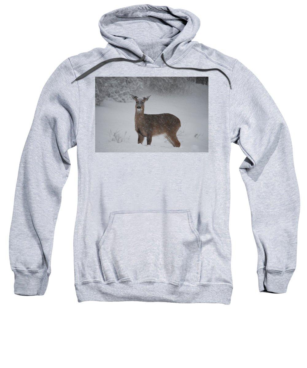 Deer Sweatshirt featuring the photograph Getting Deeper by Lori Tambakis