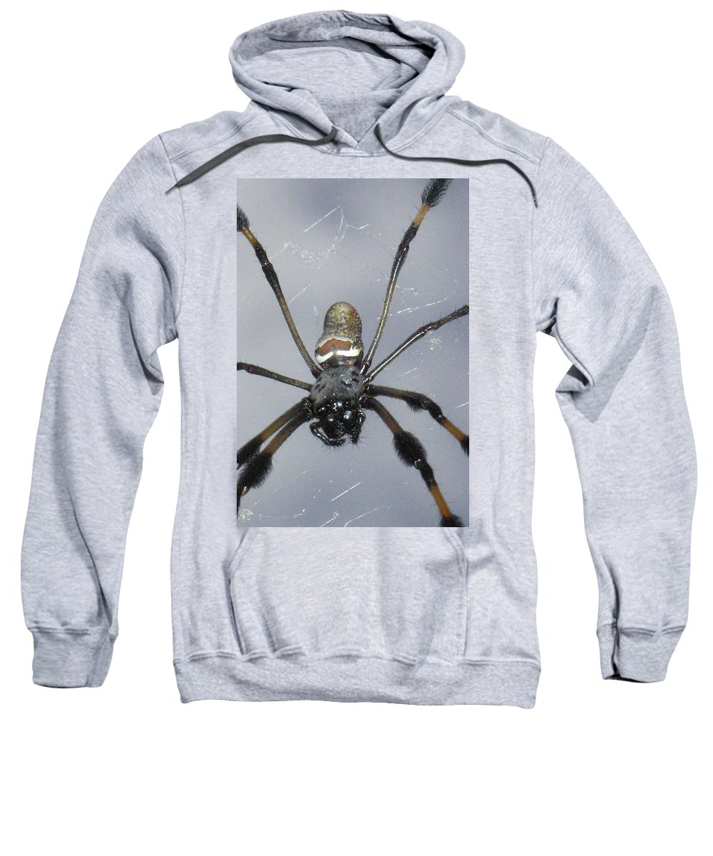 Nature Sweatshirt featuring the photograph Getting To Know A Golden Orb Weaver by Kimberly Mohlenhoff