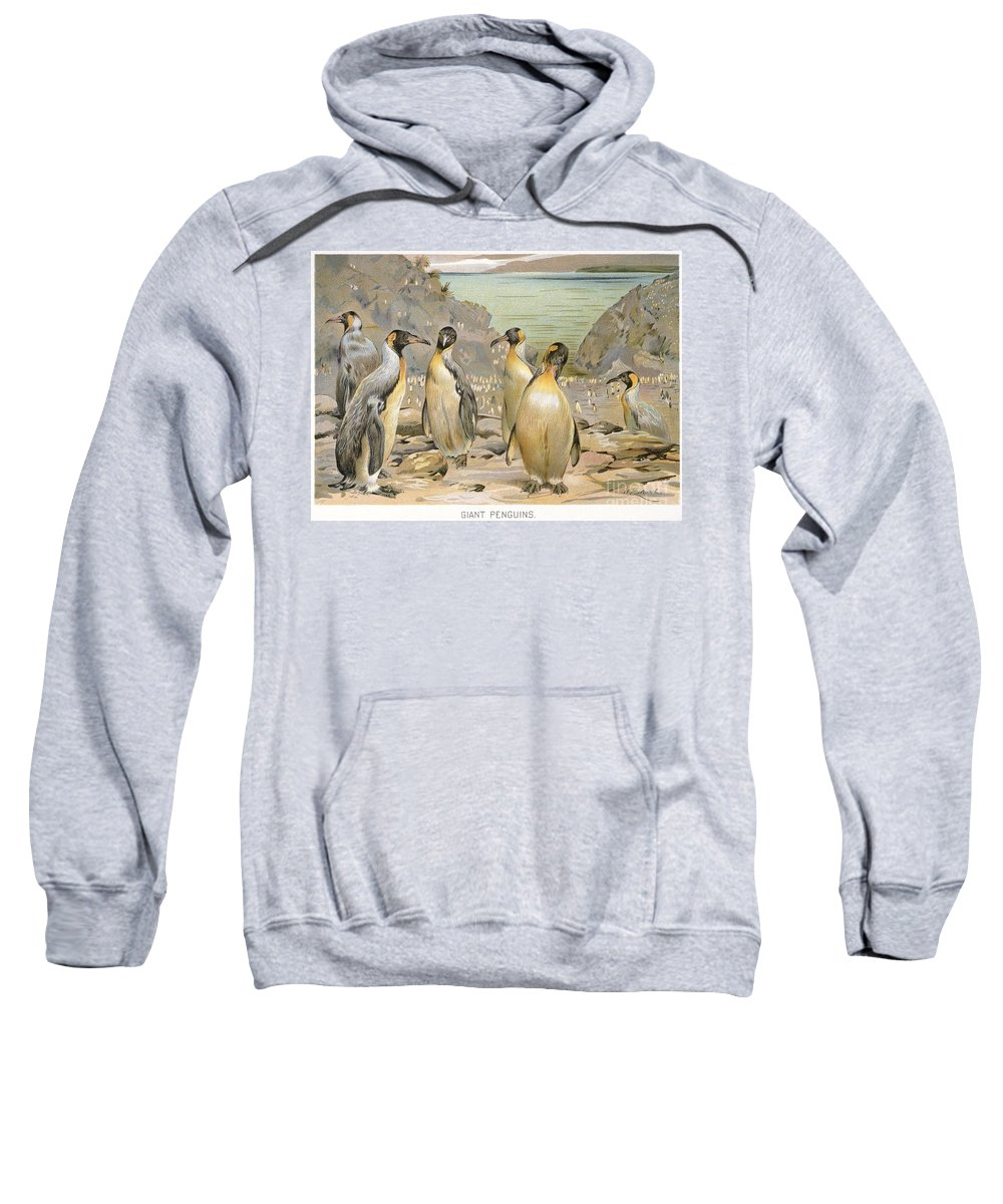 1900 Sweatshirt featuring the photograph Giant Penguins, C1900 by Granger