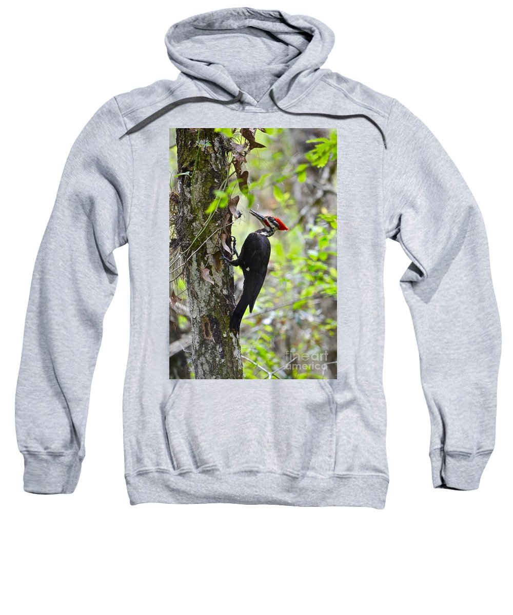Woodpecker Sweatshirt featuring the photograph Ginger In The Bayou by Andrea Spritzer