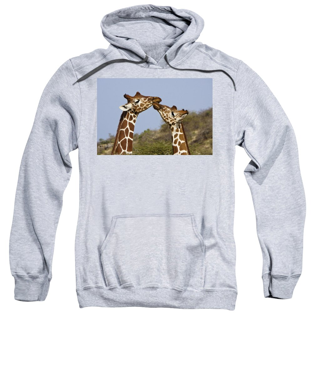 Africa Sweatshirt featuring the photograph Giraffe Kisses by Michele Burgess
