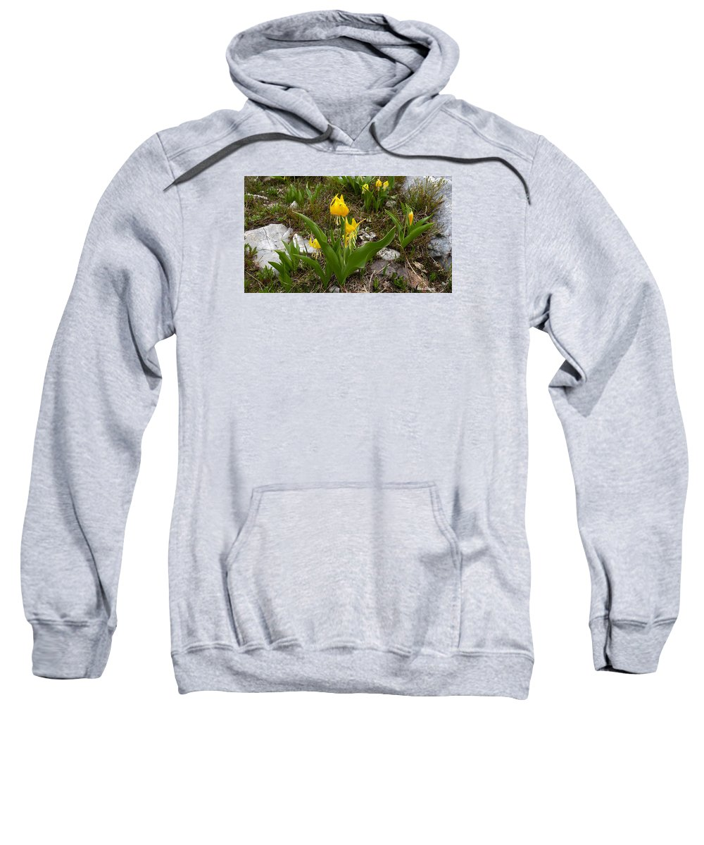 Ron Glaser Sweatshirt featuring the photograph Glacier Lily 3 by Ron Glaser