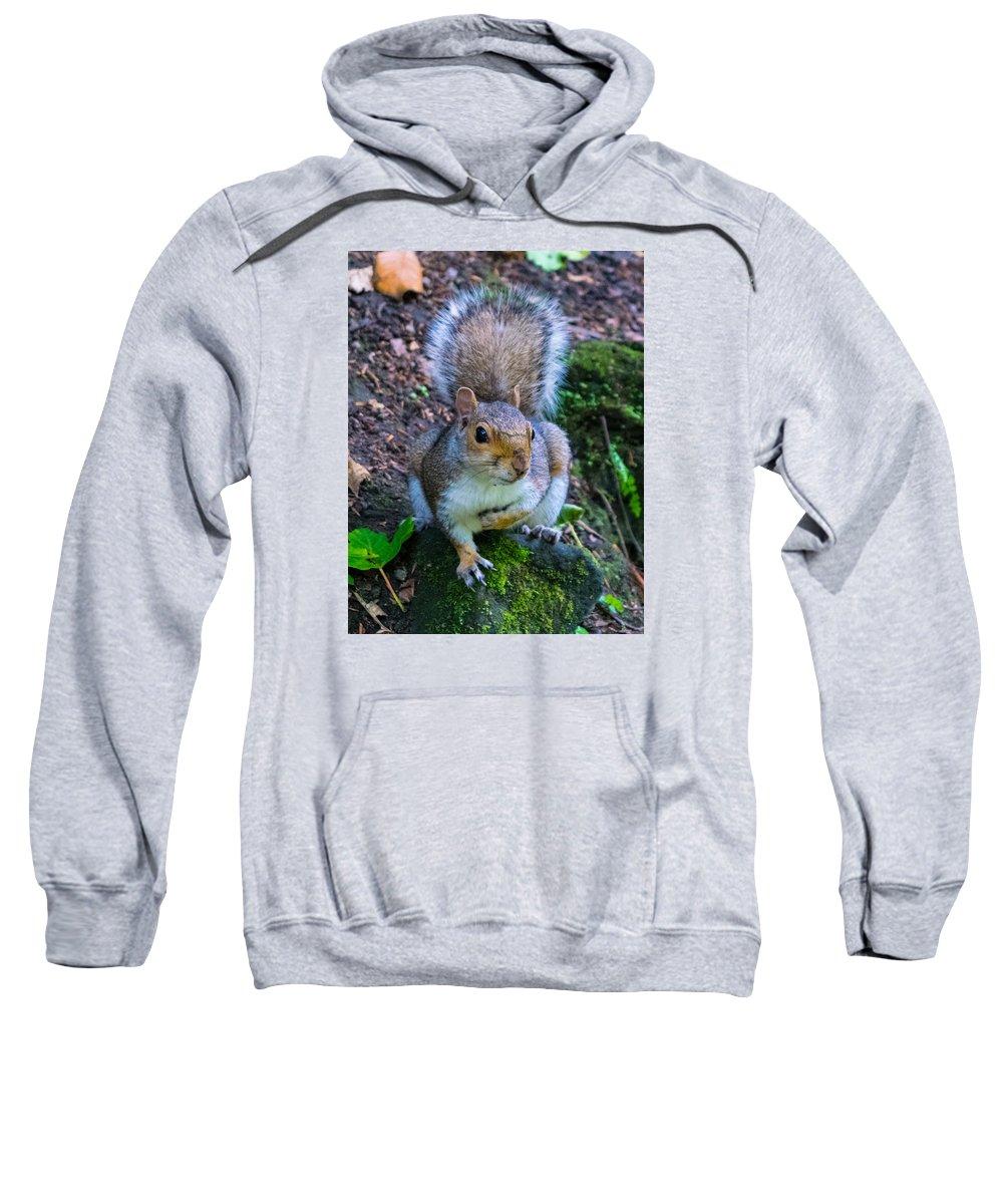 Squirrel Sweatshirt featuring the photograph Glasgow Squirrel by David Brodie