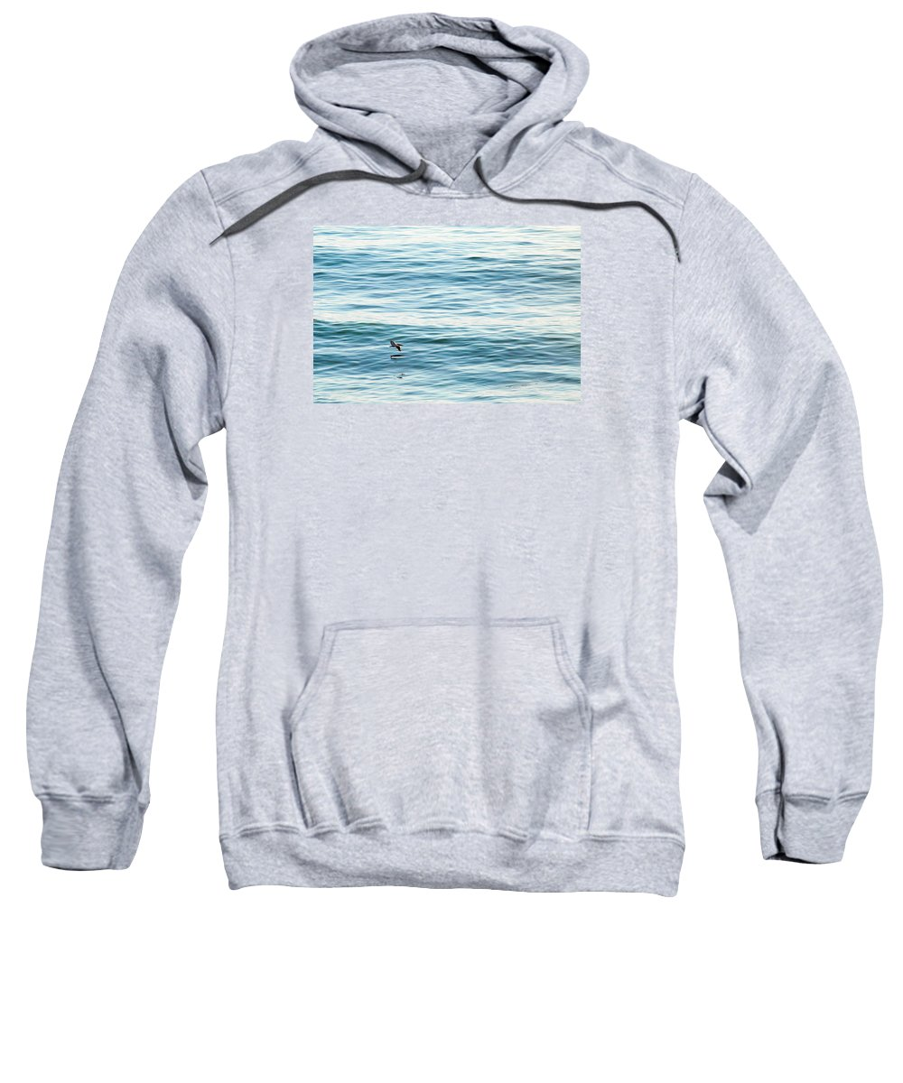 Pelican Sweatshirt featuring the photograph Glider by Zach Brown