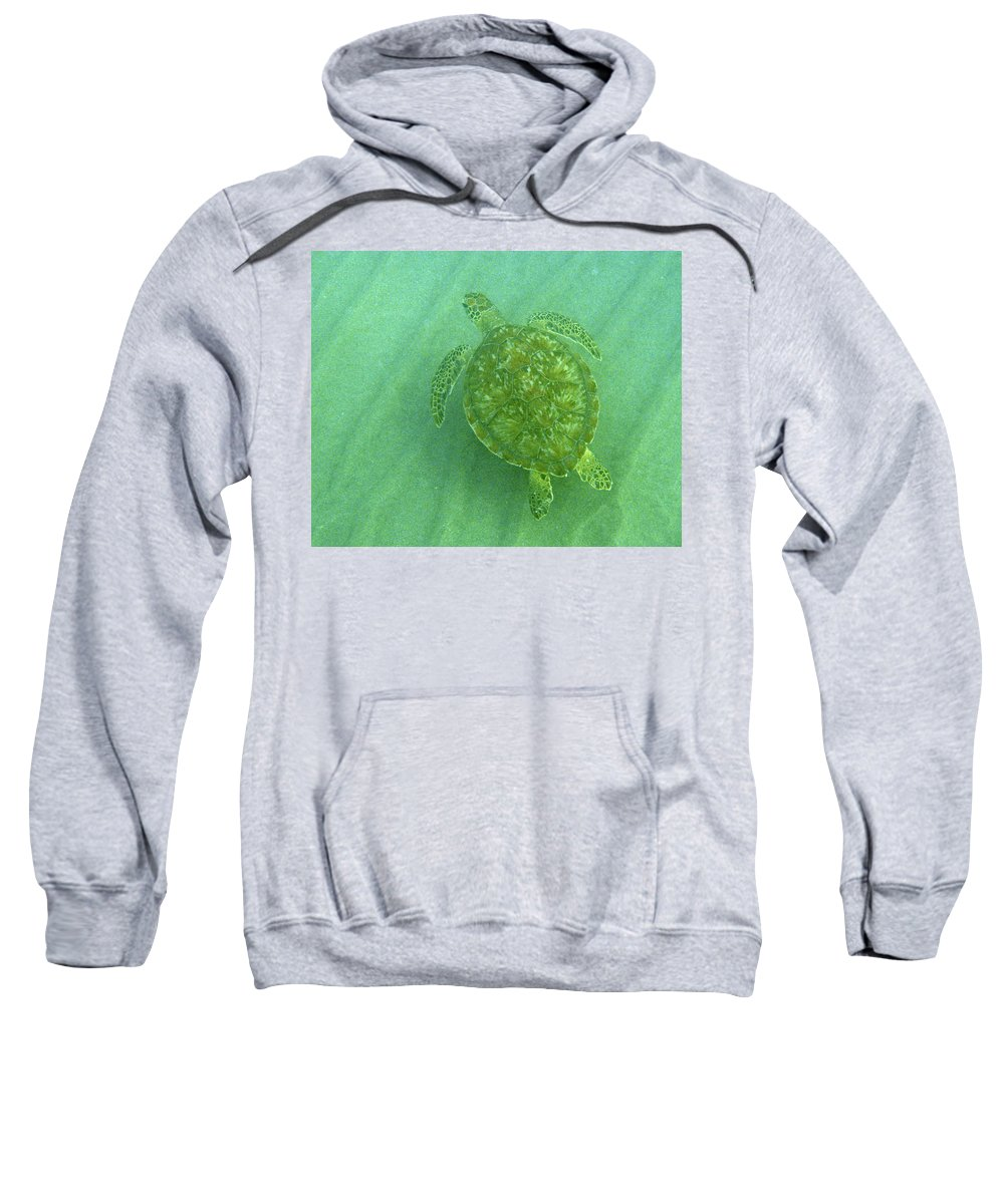 Nature Sweatshirt featuring the photograph Gliding Green by Kimberly Mohlenhoff