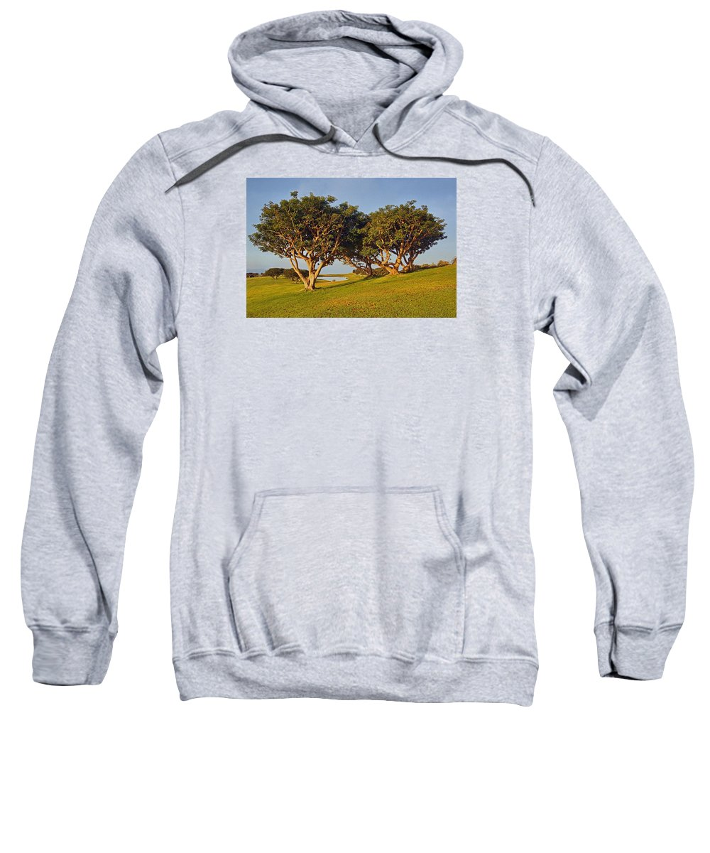 Trees Sweatshirt featuring the photograph Glory In The Morning Txb by Theo O'Connor