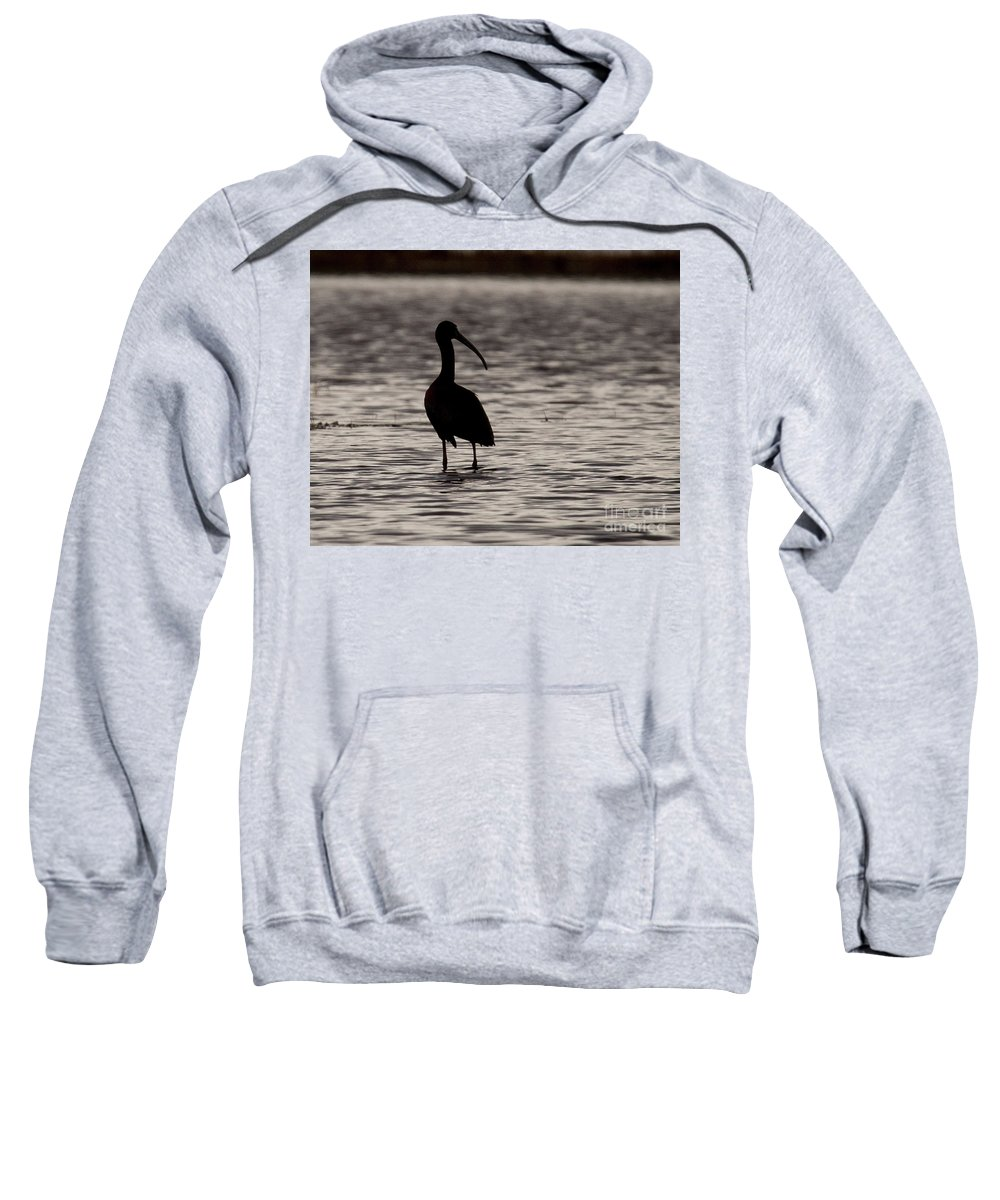 Glossy Sweatshirt featuring the photograph Glossy Ibis by Laurie Pocher
