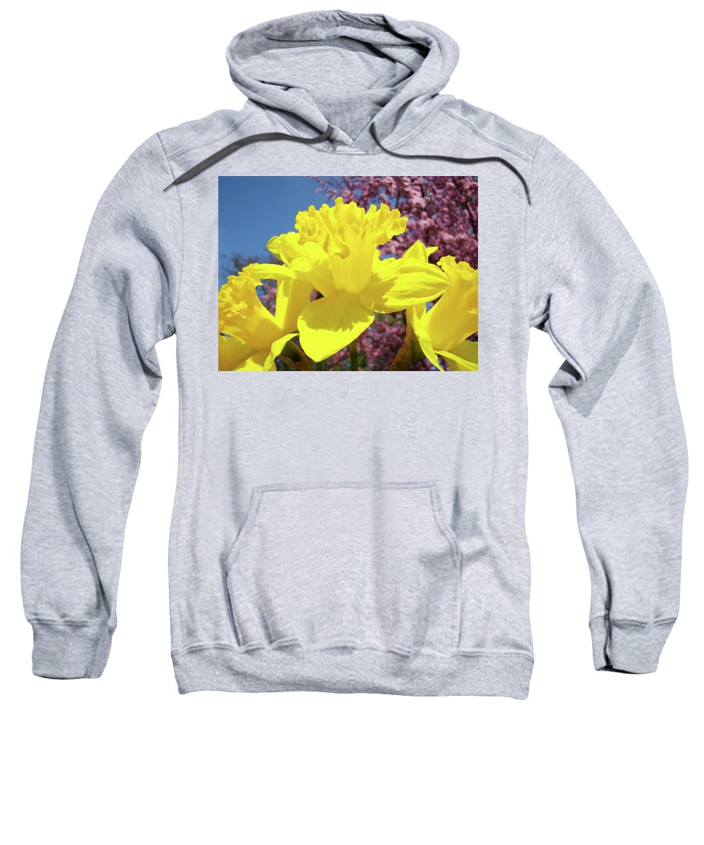 Daffodils Sweatshirt featuring the photograph Glowing Yellow Daffodils Art Prints Pink Blossoms Spring Baslee Troutman by Baslee Troutman