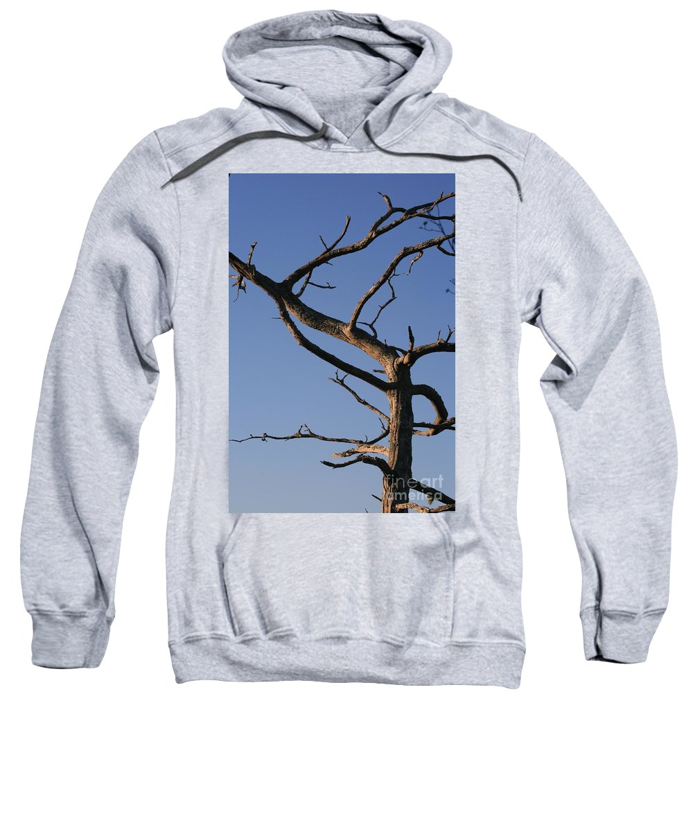 Tree Sweatshirt featuring the photograph Gnarly Tree by Nadine Rippelmeyer