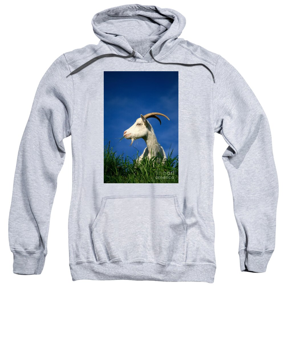 Animals Sweatshirt featuring the photograph Goat by Gaspar Avila