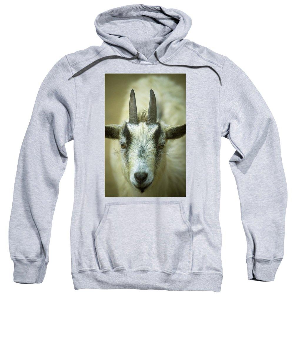 Animals Sweatshirt featuring the photograph Goat by Robert Potts