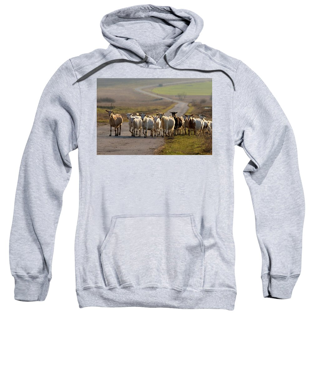 Goat Sweatshirt featuring the photograph Goats Walking Home by Cliff Norton