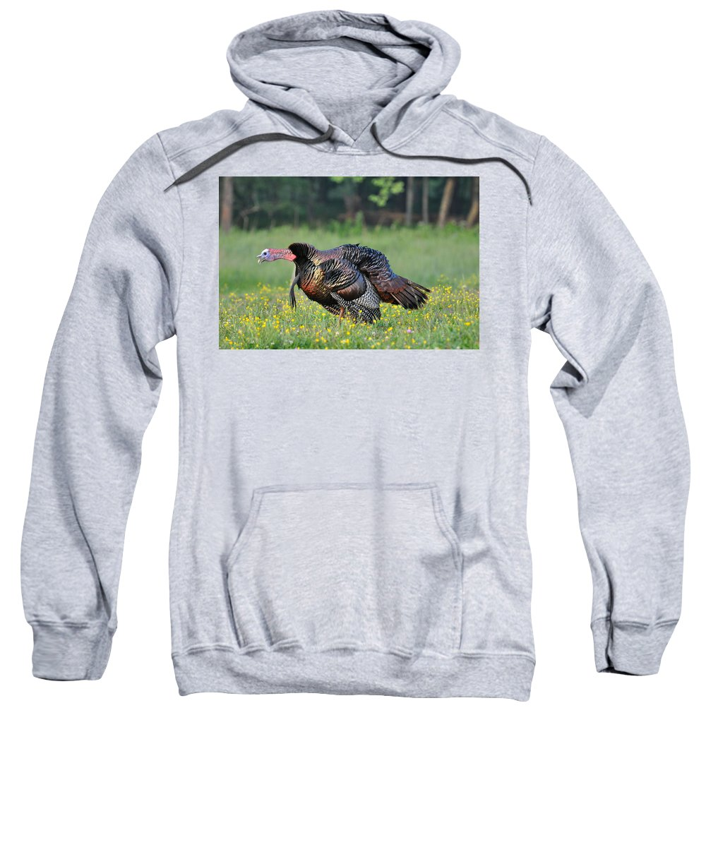 Turkey Sweatshirt featuring the photograph Gobble Gobble by Todd Hostetter