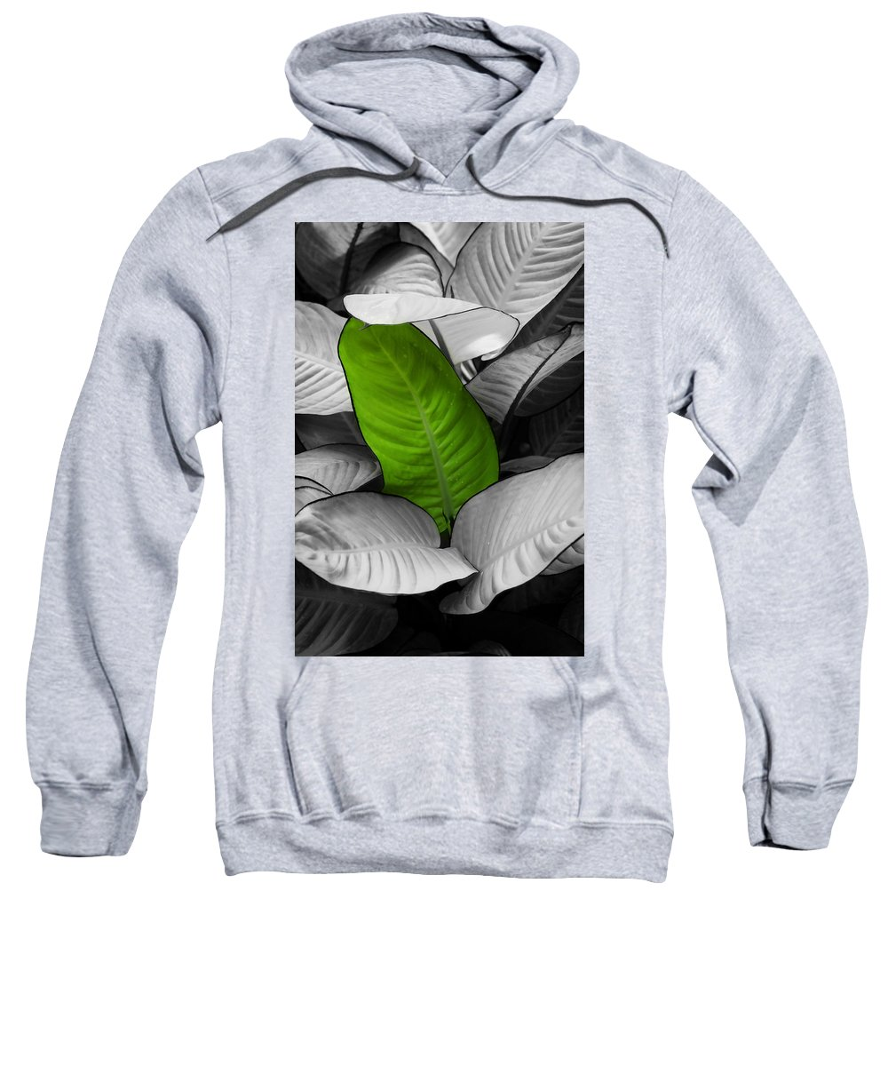 Leaf Sweatshirt featuring the photograph Going Green - Dreamy by Marilyn Hunt