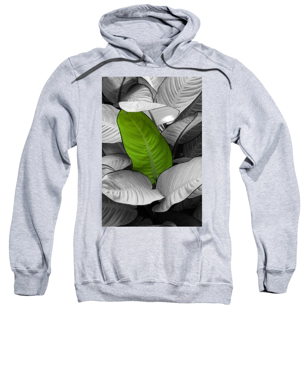 Green Sweatshirt featuring the photograph Going Green by Marilyn Hunt