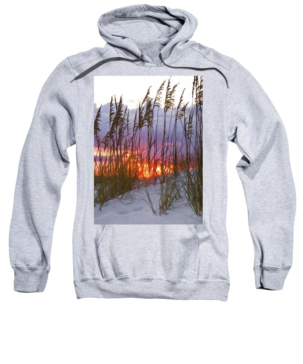 Sea Oats Sweatshirt featuring the photograph Golden Amber by Janet Fikar