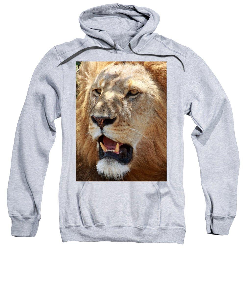 Lion Sweatshirt featuring the photograph Golden Boy by Aidan Moran