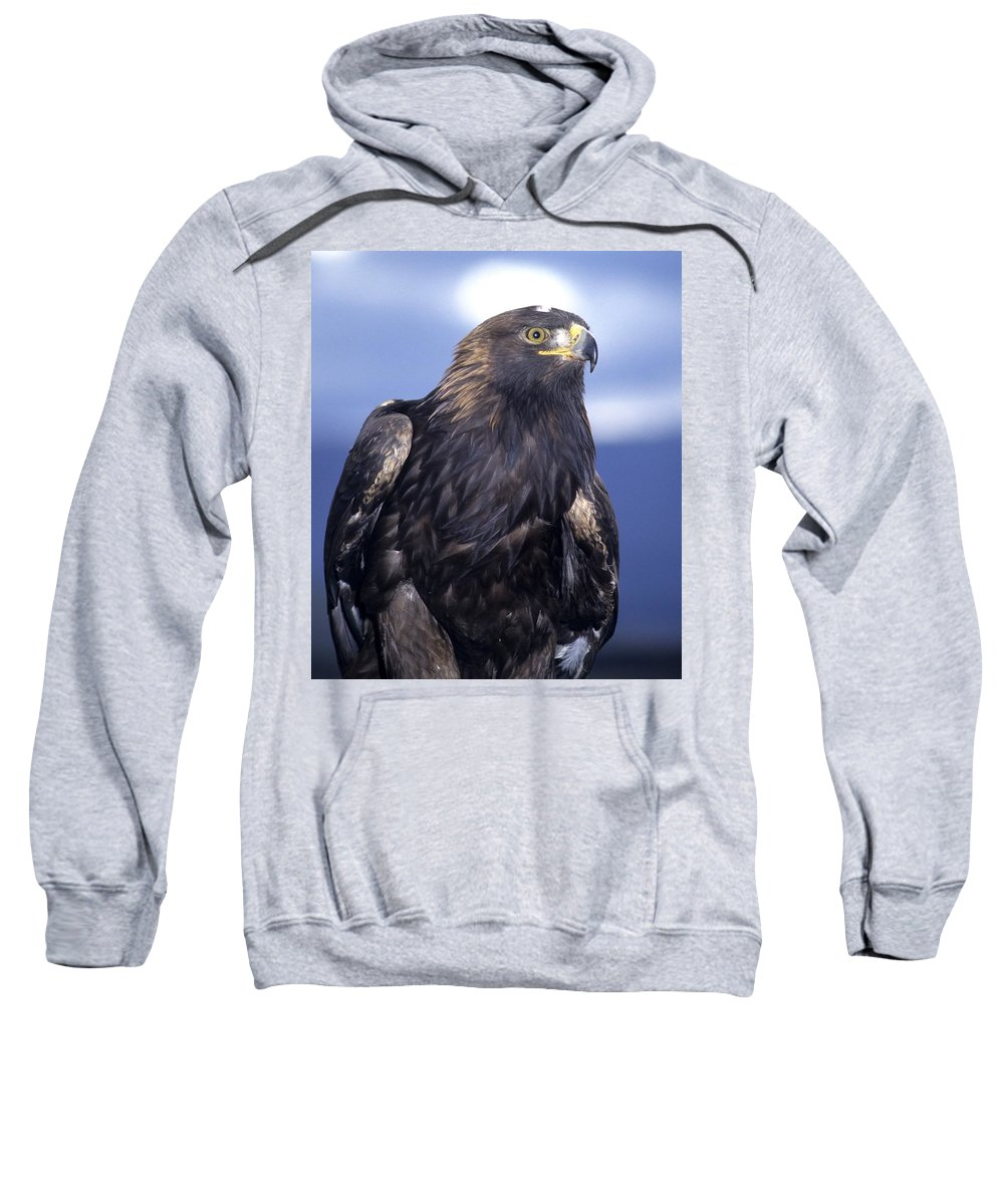 Wildlife Sweatshirt featuring the photograph Golden Eagle by Larry Allan