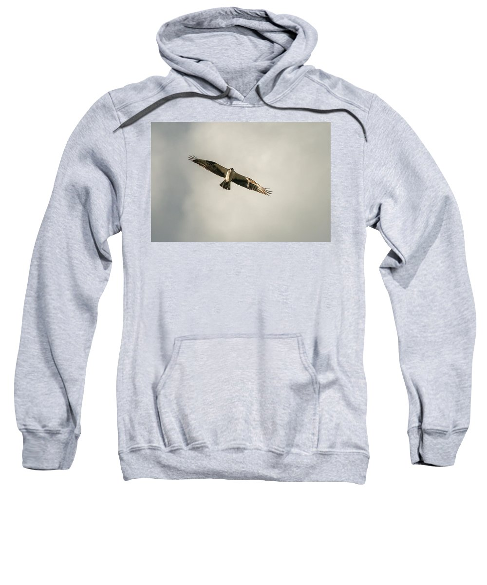 Nature Sweatshirt featuring the photograph Golden Hour Hunt by Mike Herron