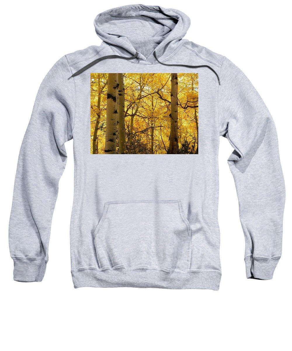 Sweatshirt featuring the photograph Golden Light by Darlene Blaher