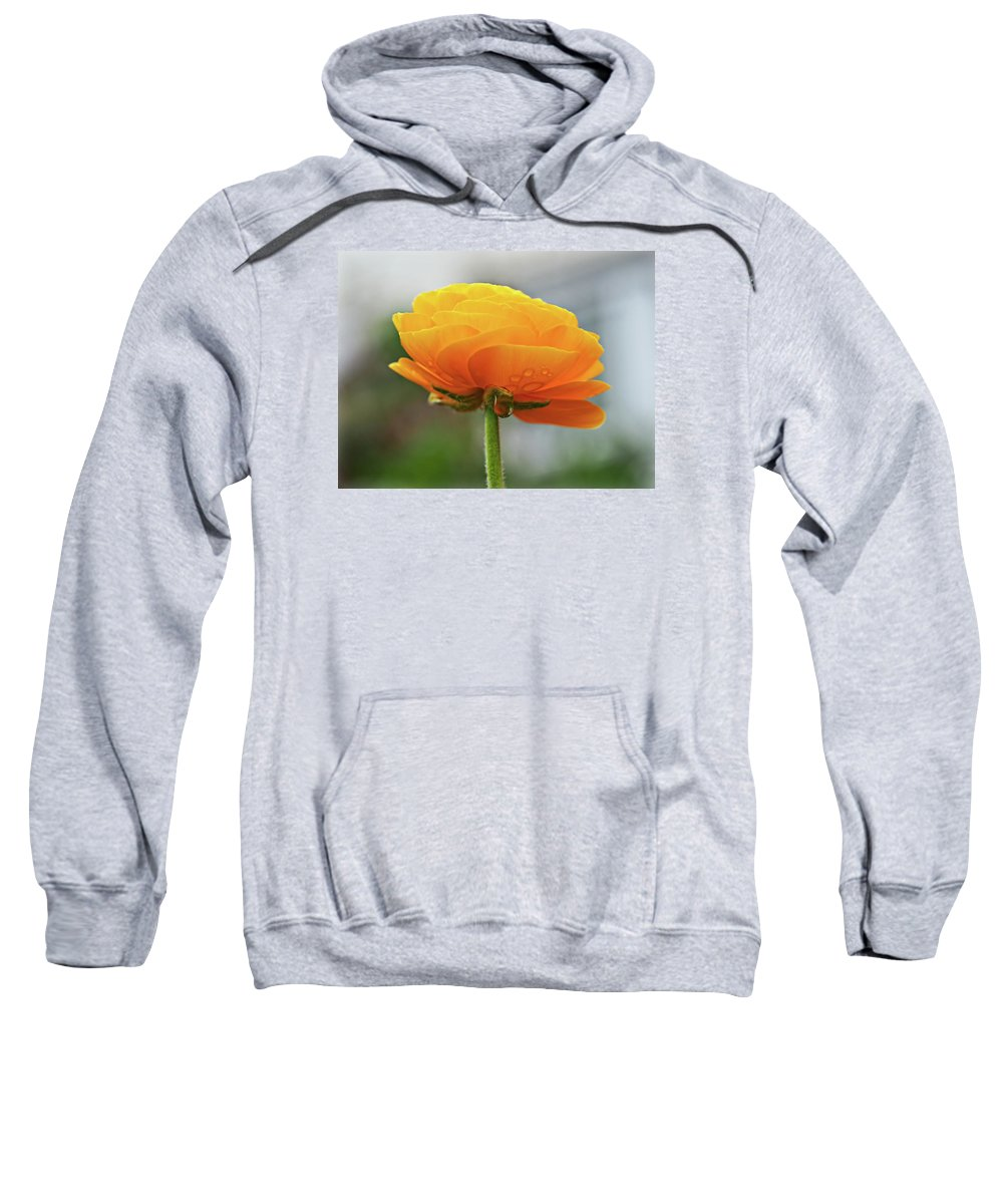 Ranunculus Sweatshirt featuring the photograph Golden Ranunculus by Susie Peek