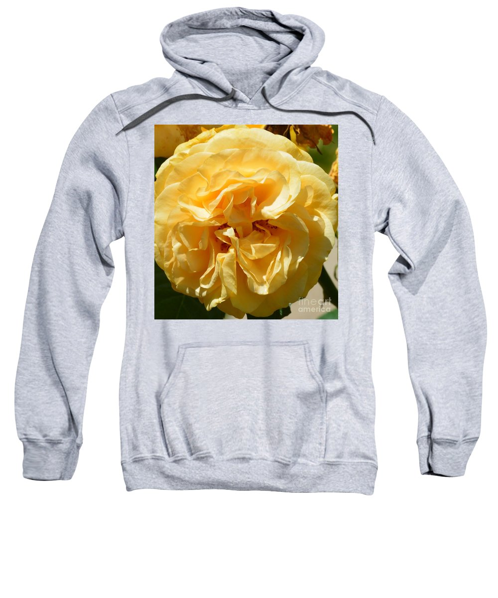 Golden Rose Swirl Sweatshirt featuring the photograph Golden Rose Swirl by Maria Urso