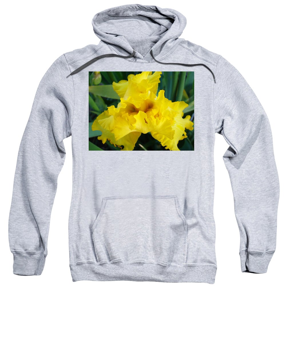�irises Artwork� Sweatshirt featuring the photograph Golden Yellow Iris Flower Garden Irises Flora Art Prints Baslee Troutman by Baslee Troutman