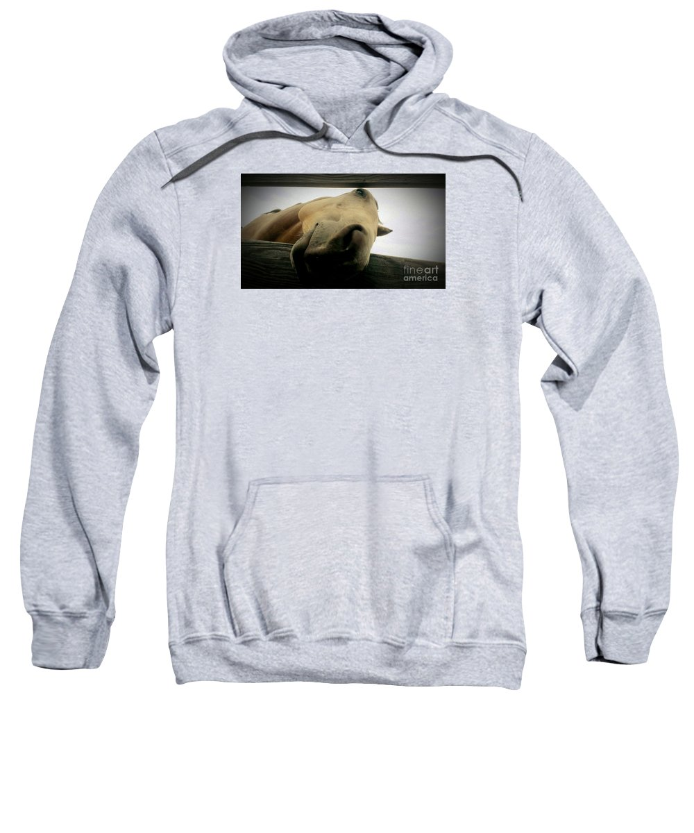 Horse Sweatshirt featuring the photograph Goofball by LKB Art and Photography