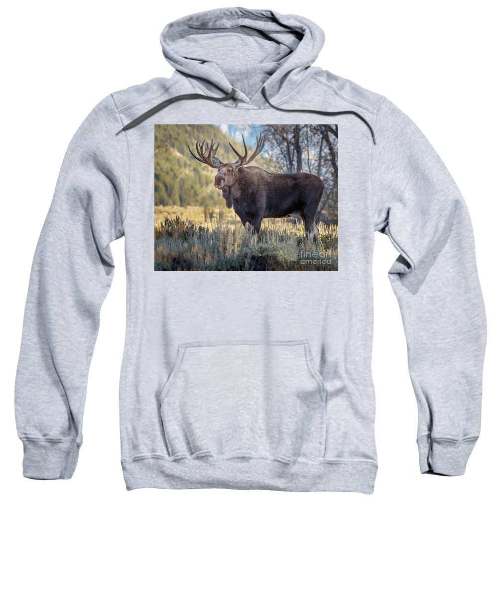 Moose Sweatshirt featuring the photograph Grand Teton Moose by Jerry Fornarotto