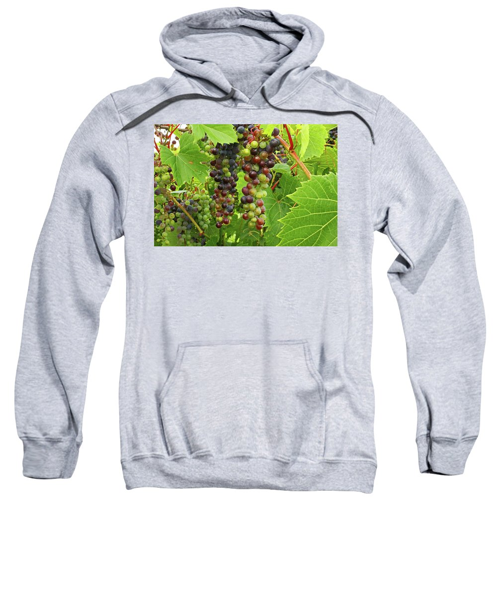 Grape Sweatshirt featuring the photograph Grape Harvest by Ira Marcus