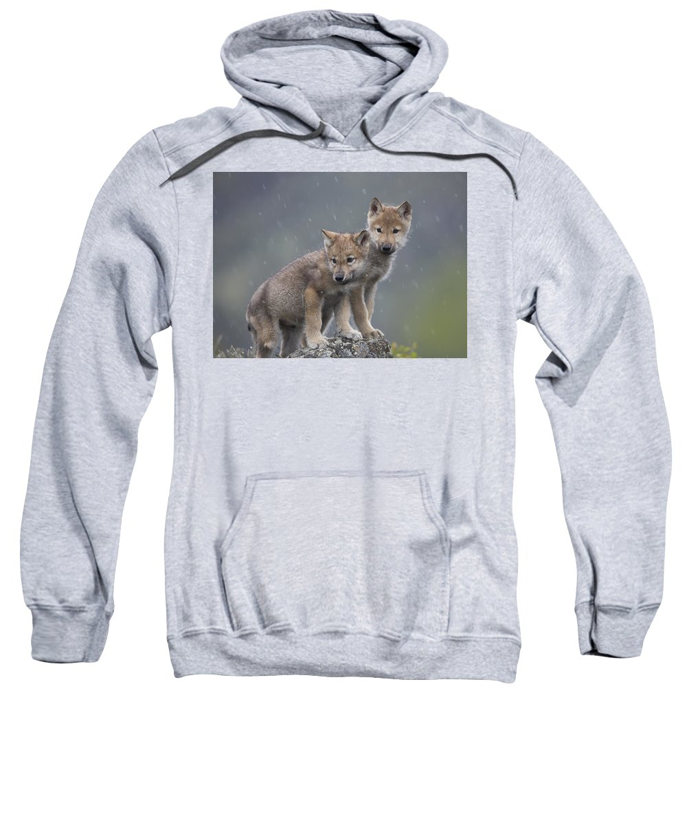 Mp Sweatshirt featuring the photograph Gray Wolf Canis Lupus Pups In Light by Tim Fitzharris
