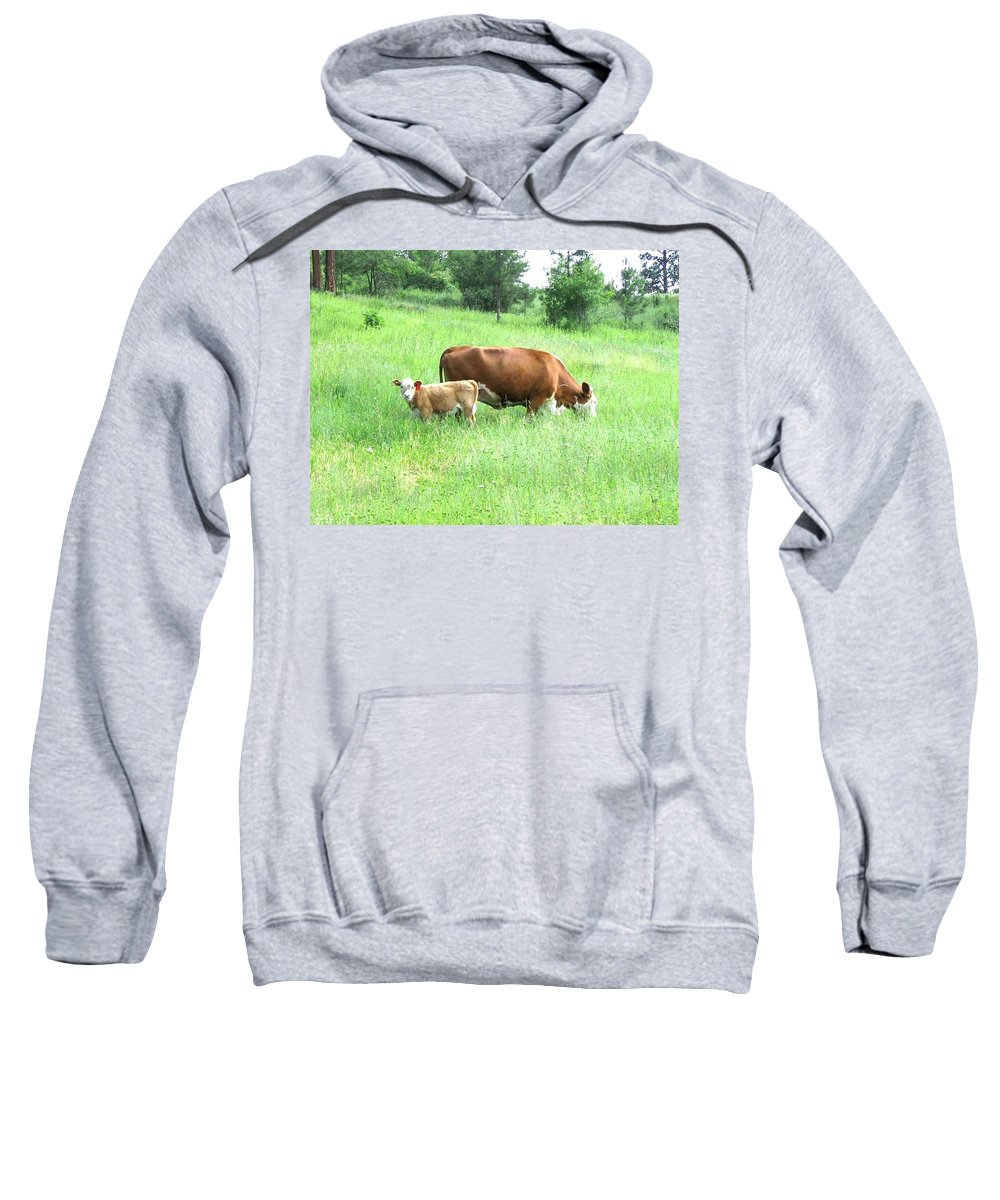 Cow Sweatshirt featuring the photograph Grazing Cow And Calf by Will Borden
