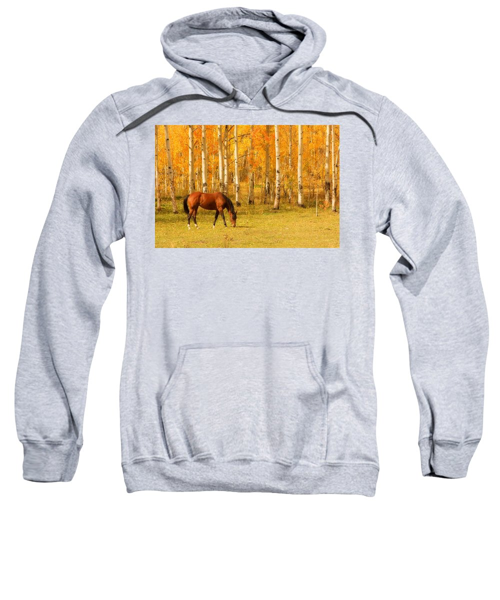 Horse Sweatshirt featuring the photograph Grazing Horse In The Autumn Pasture by James BO Insogna