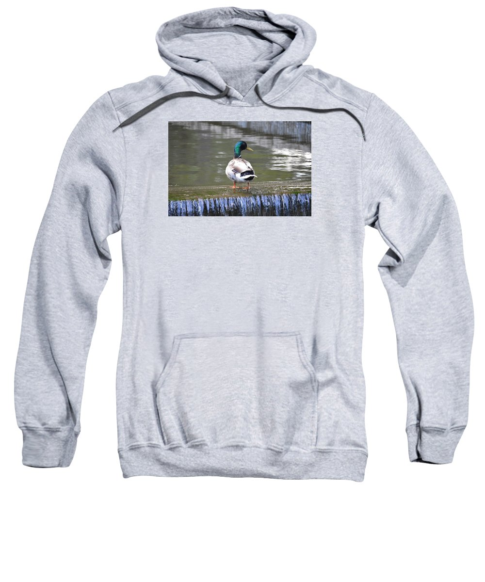 Duck Lake Swim Loose Park Kansas City Sweatshirt featuring the photograph Great Day For A Swim by Katie LeMae Creative Photography