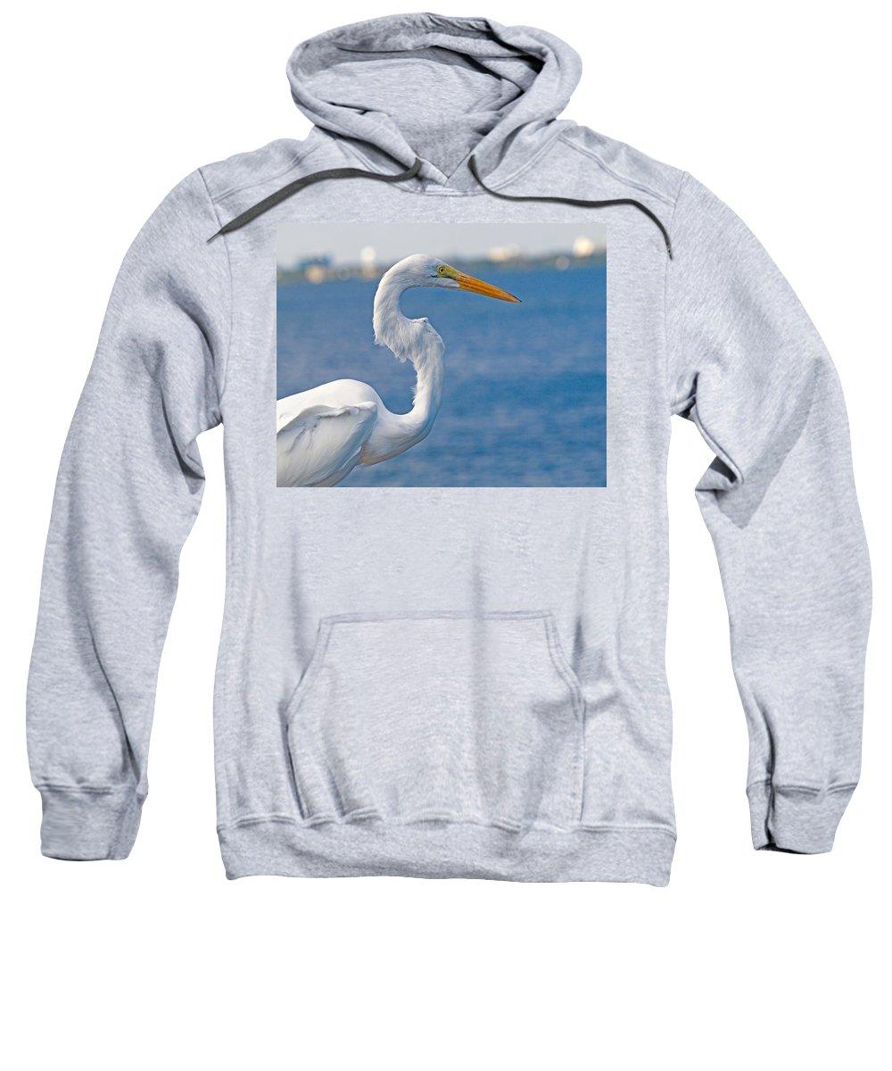 Great; Egret; Ardea; Alba; Bird; Seabird; Ocean; Indian; River; Lagoon; Sea; Melbourne; Beach; Breva Sweatshirt featuring the photograph Great Egret At Melbourne Beach by Allan Hughes