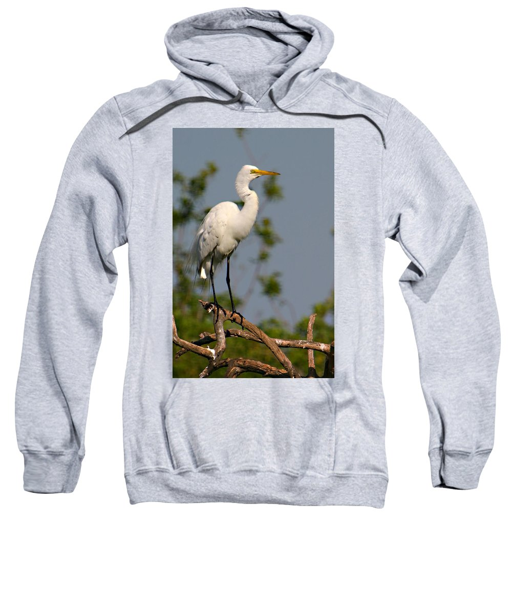 Great White Egret Bird Feathers Flying Florida Sanctuary Wildlife Photograph Photography Sweatshirt featuring the photograph Great White Egret Pose by Shari Jardina