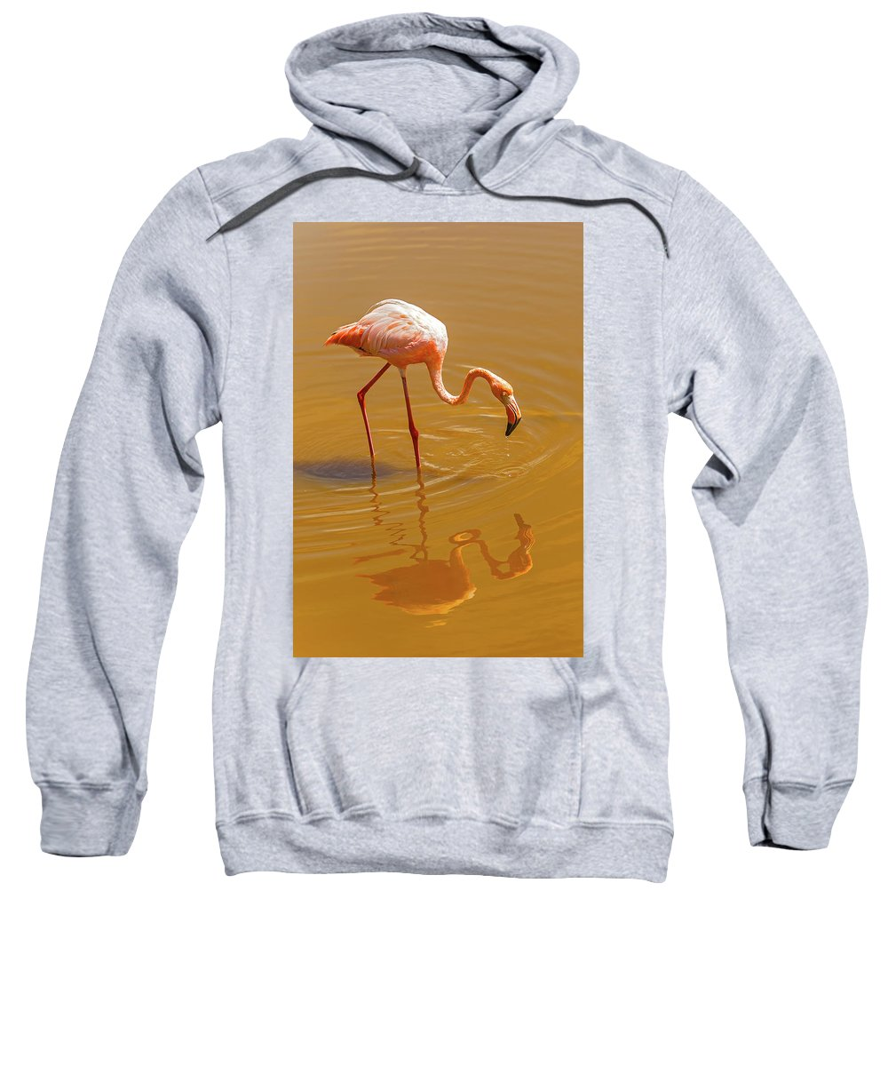 Flamingo Sweatshirt featuring the photograph Greater Flamingo In The Water At Galapagos Islands by Marek Poplawski