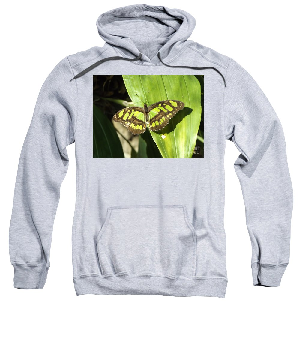 Green Sweatshirt featuring the photograph Green Butterfly by Erick Schmidt