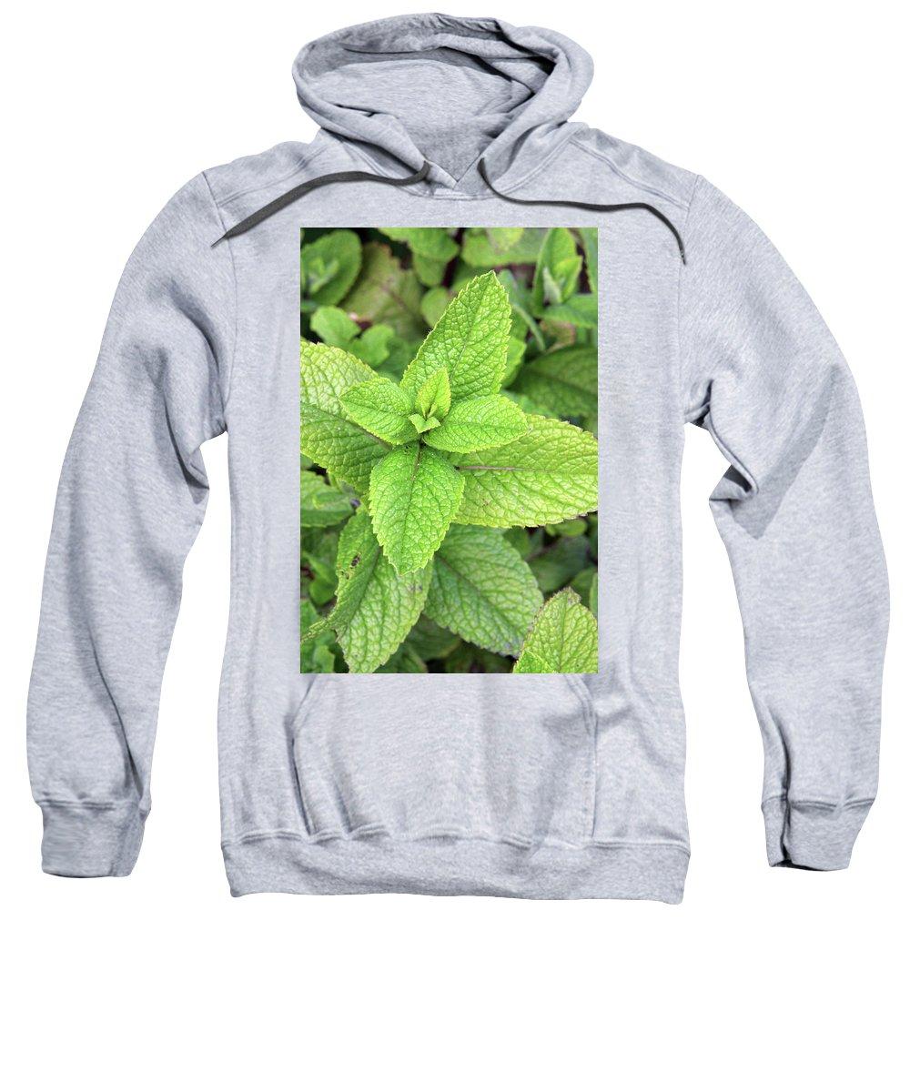 Mentha Sweatshirt featuring the photograph Green Mint Leaves by Aidan Moran