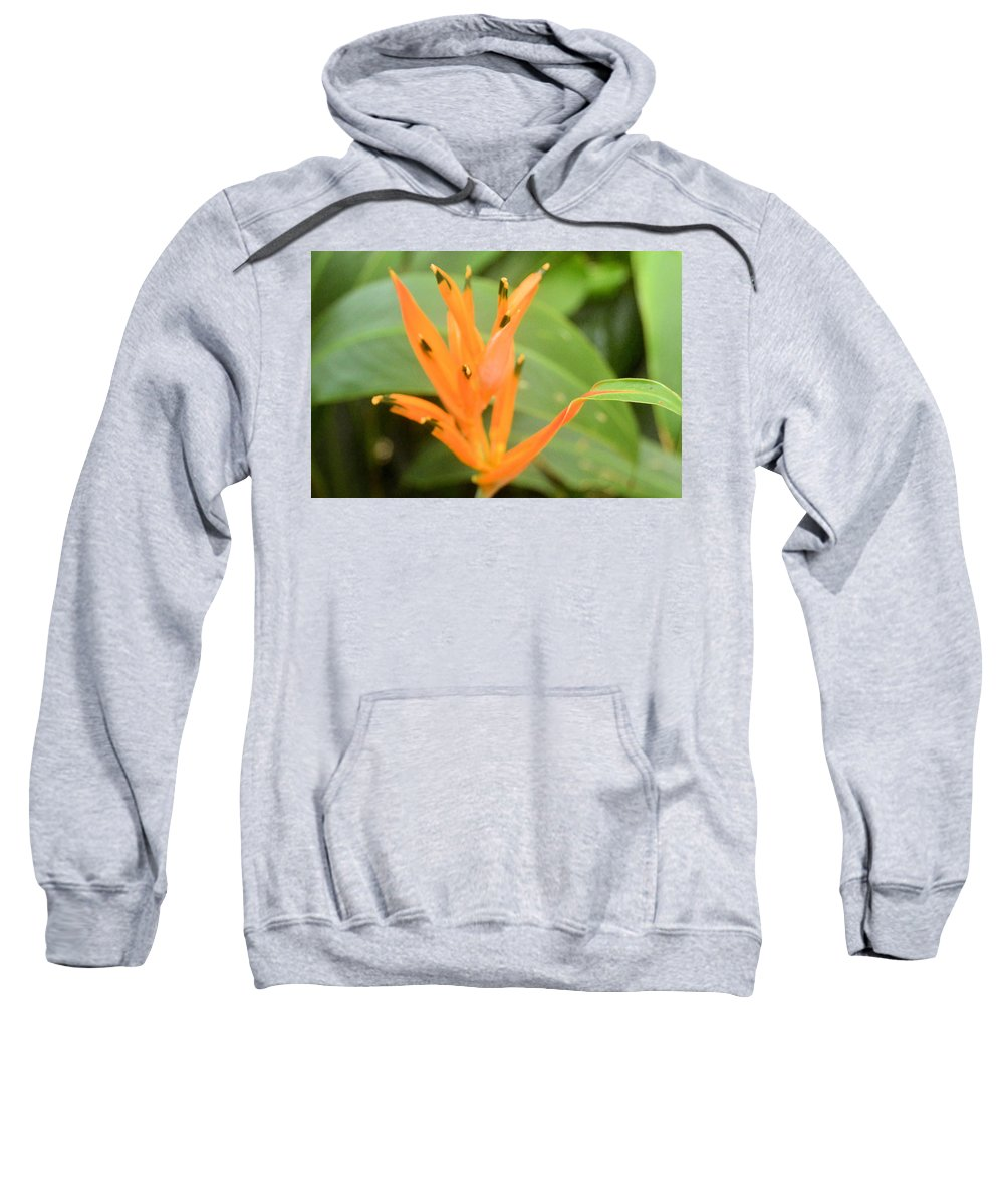 upside Down Sweatshirt featuring the photograph Green Tipped by Wendy Fox