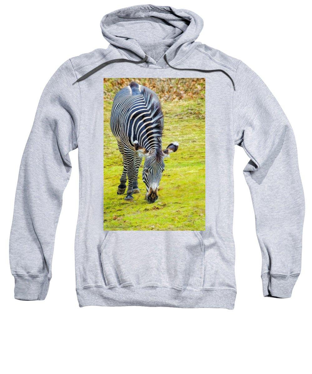 Grevys Zebra Sweatshirt featuring the photograph Grevys Zebra Left by LeeAnn McLaneGoetz McLaneGoetzStudioLLCcom
