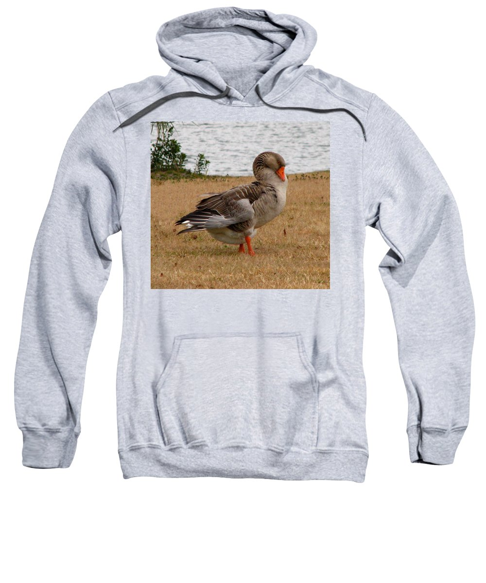 Goose Sweatshirt featuring the photograph Greylag Goose 2 by J M Farris Photography
