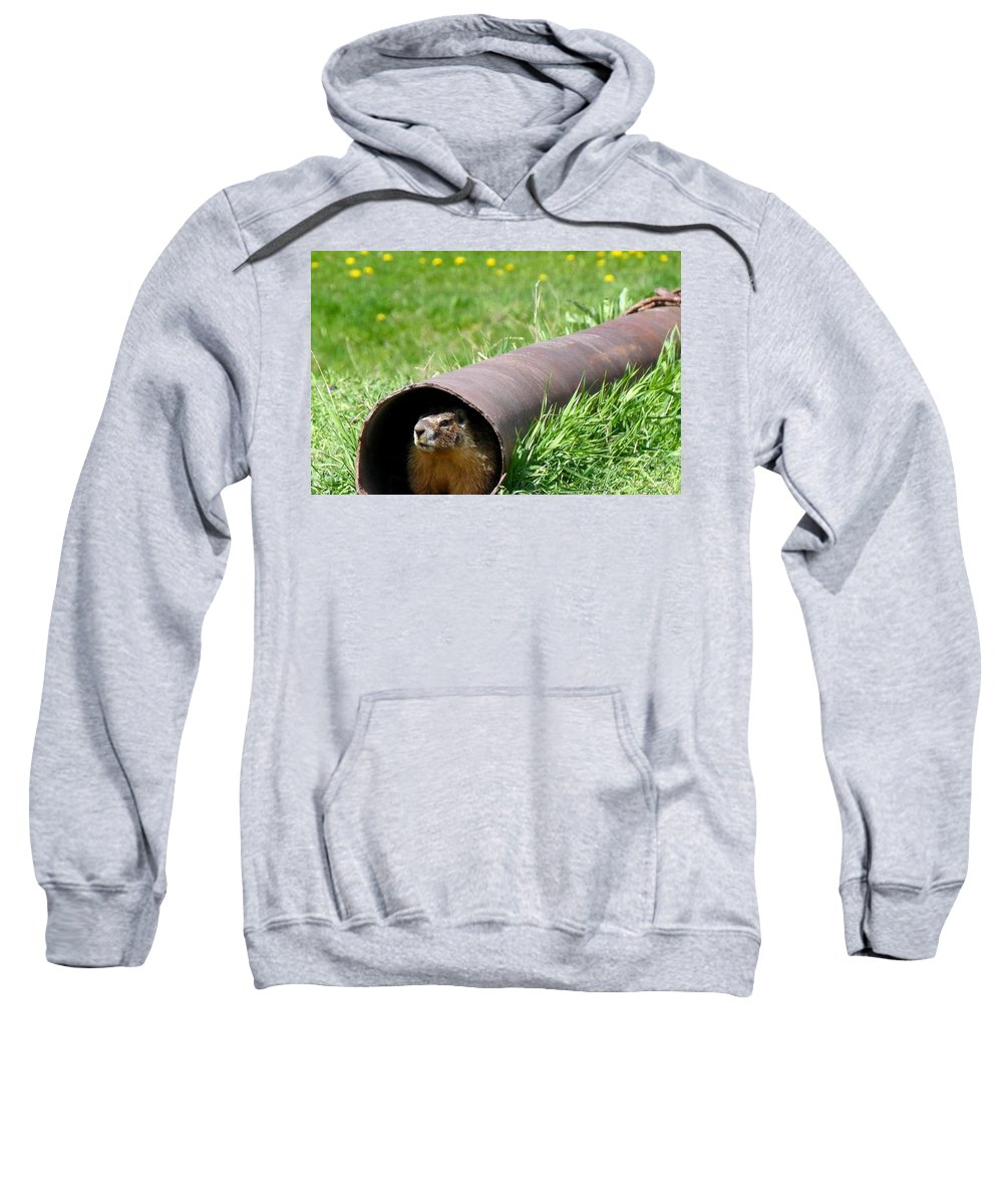 Groundhog Sweatshirt featuring the photograph Groundhog In A Pipe by Will Borden