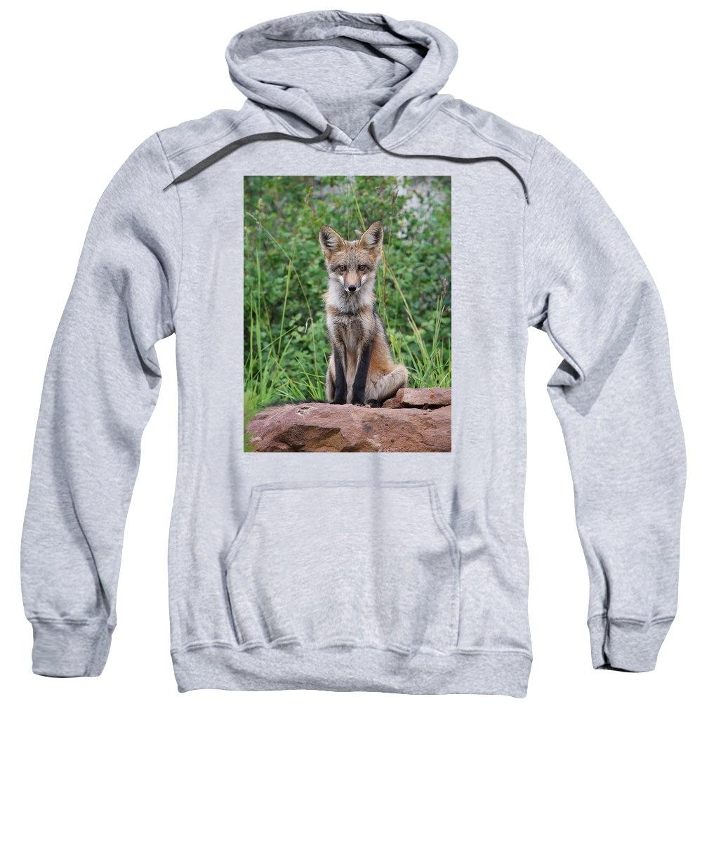 Fox Sweatshirt featuring the photograph Guardian by LeAnne Perry