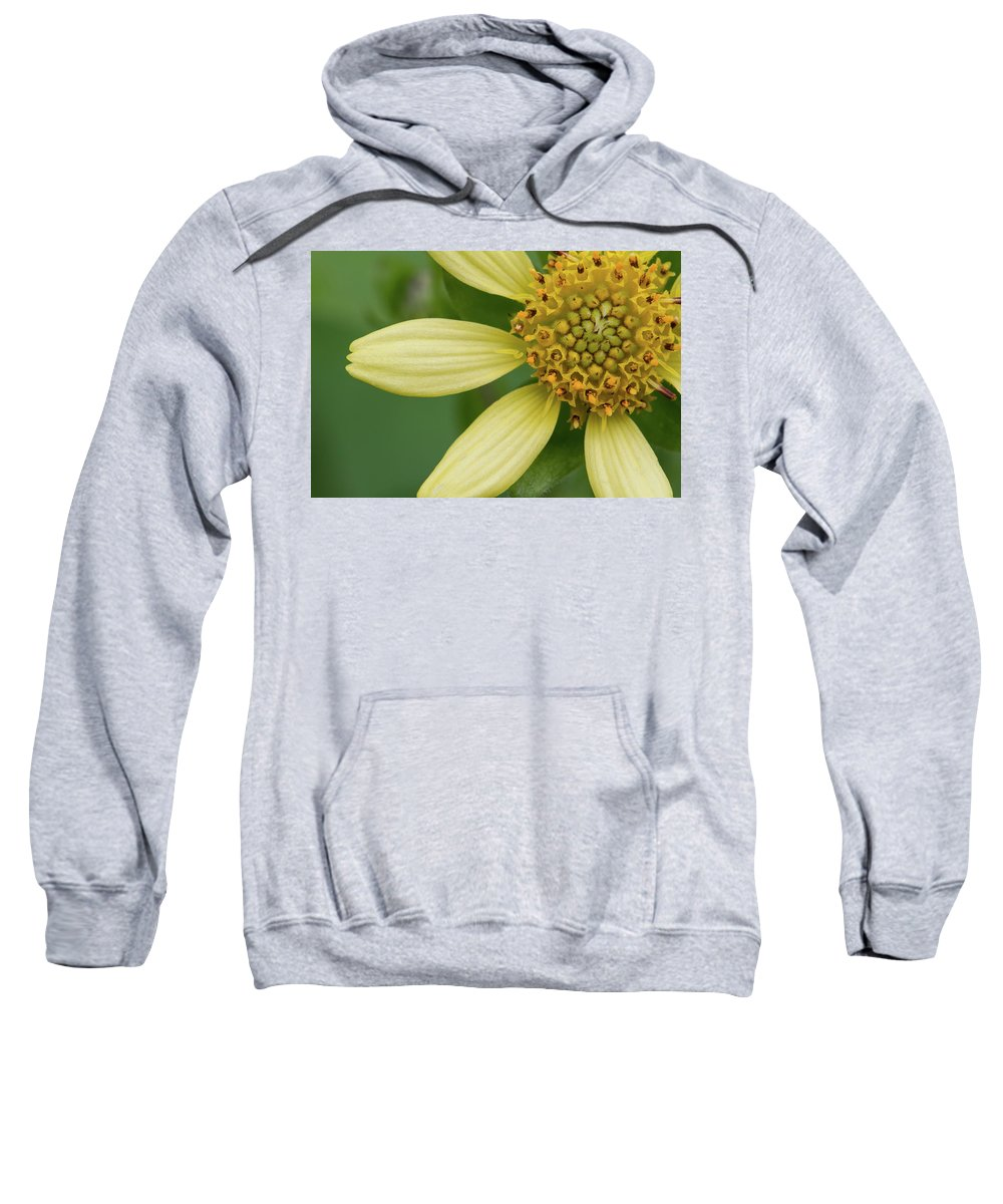 Smallanthus Uvedalia Sweatshirt featuring the photograph Hairy Leafcup #2 by Paul Rebmann