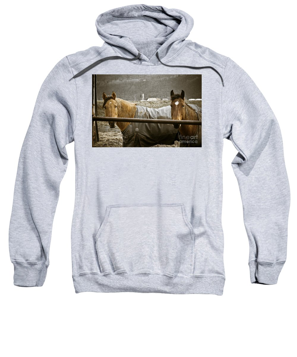 Clay Sweatshirt featuring the photograph Hanging Out by Clayton Bruster