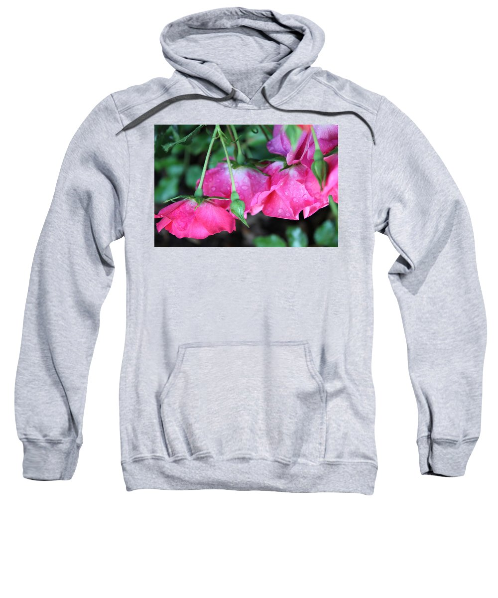 Roses Sweatshirt featuring the photograph Hanging Roses by Lauri Novak