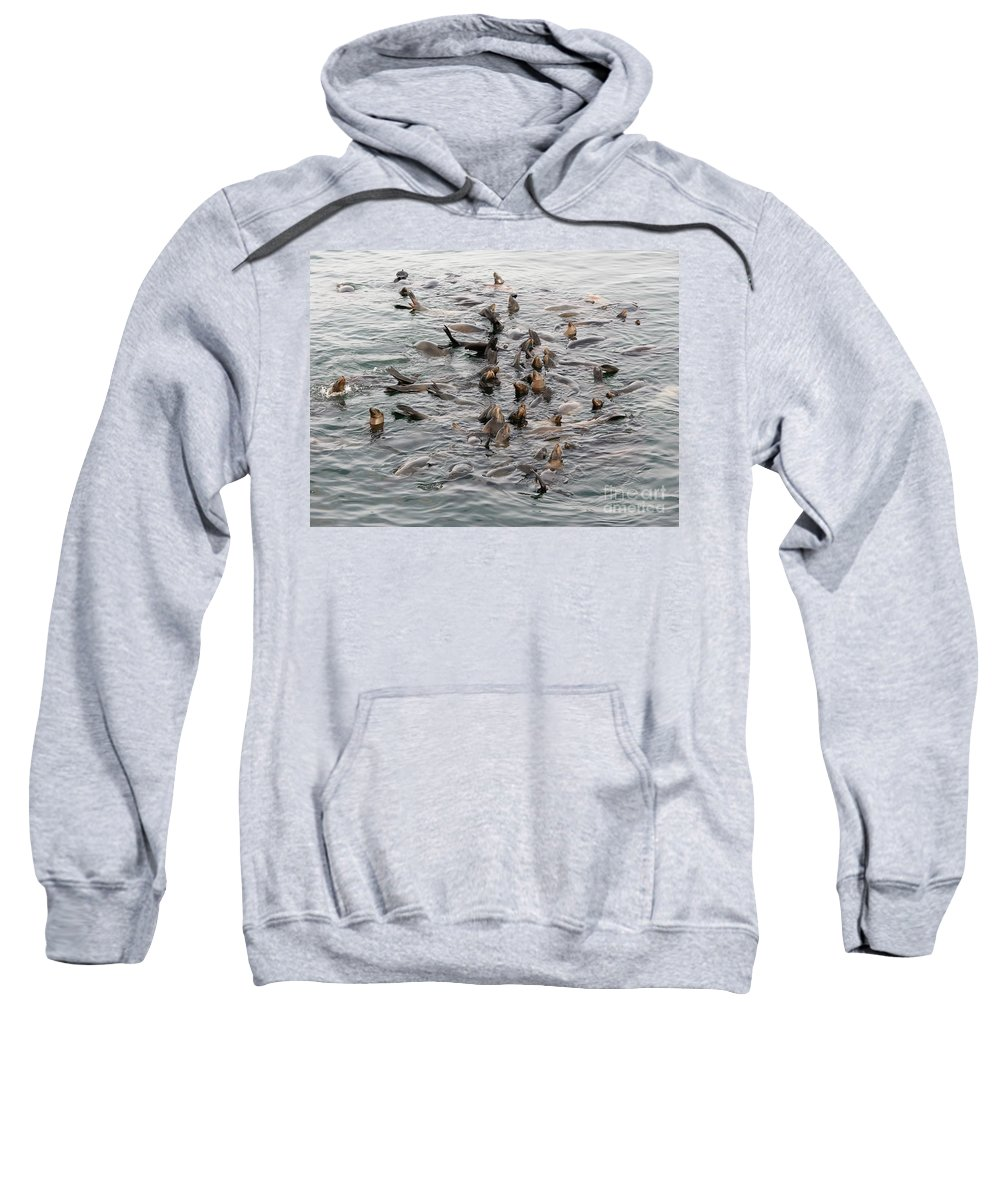 Sweatshirt featuring the photograph Happy Harbour Seals by Carol Groenen