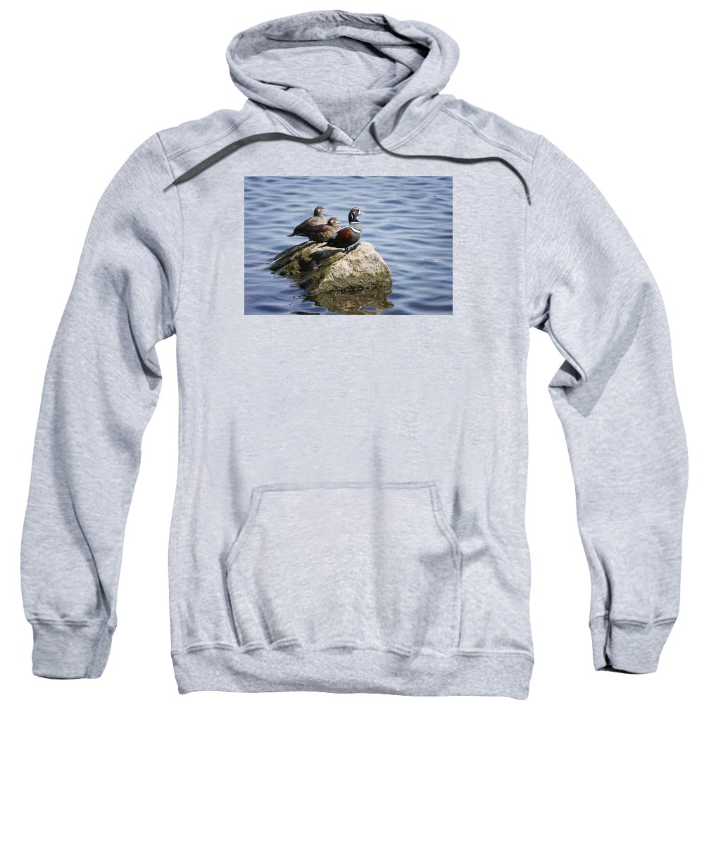 Gary Hall Sweatshirt featuring the photograph Harlequin Romance by Gary Hall
