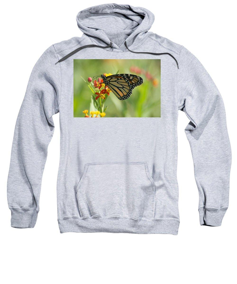 Wildlife Sweatshirt featuring the photograph Hawaiian Monarch 1 by Michael Peychich